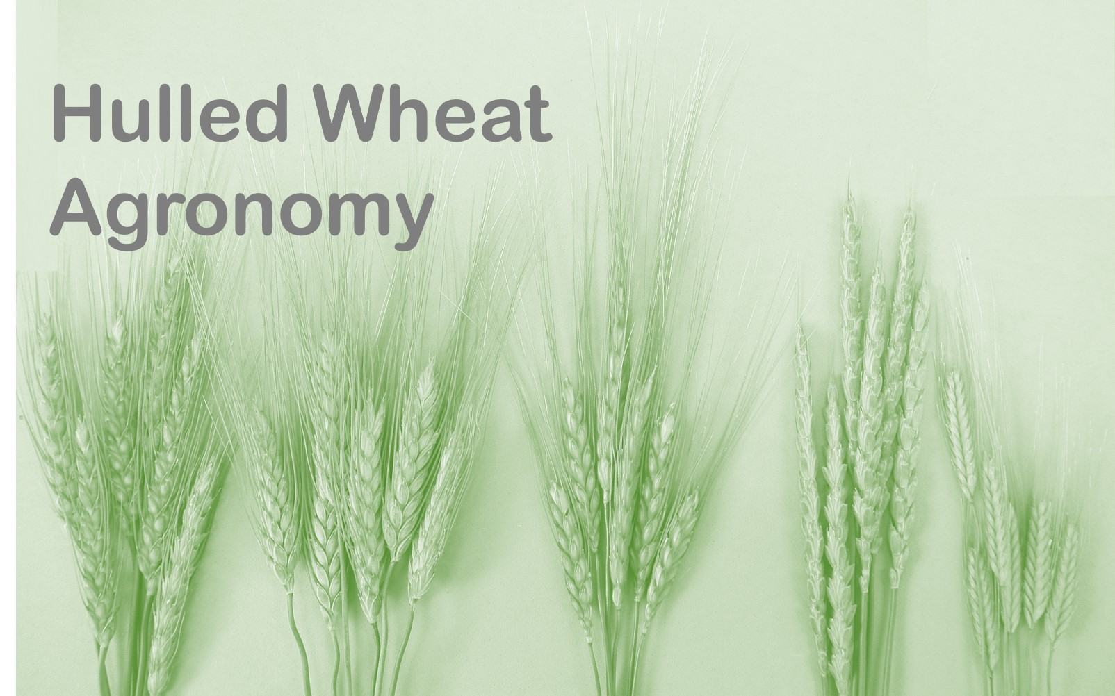 Field Crop Information - College of Agriculture and Bioresources ...