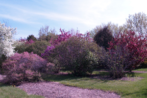 Picture of Patterson Garden Arboretum